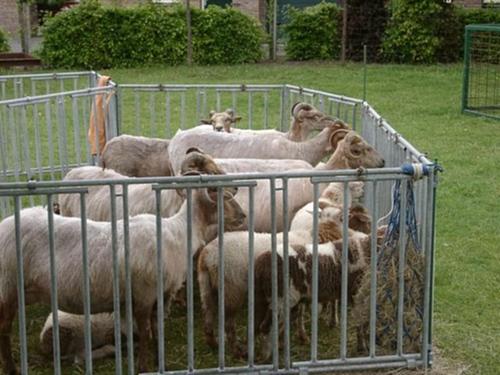 Afbeeldingsresultaat voor schapen in een pen